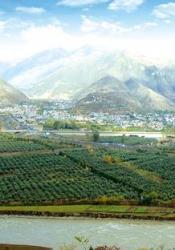 武都—油橄榄的故乡