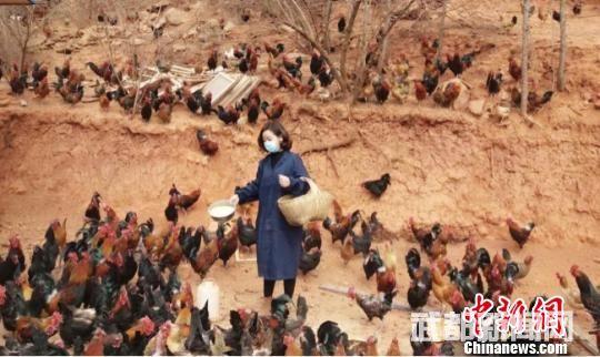 """甘肃武都""""飞""""出山窝窝的妇女返乡""""开垦""""荒山陡坡"""